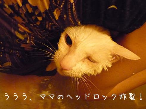 ぶーちゃん風呂2