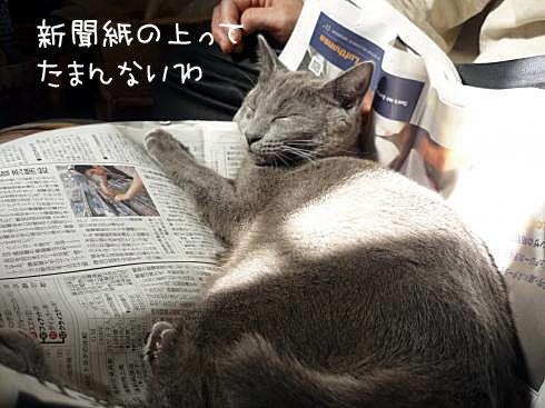 ゆきじ新聞紙の上