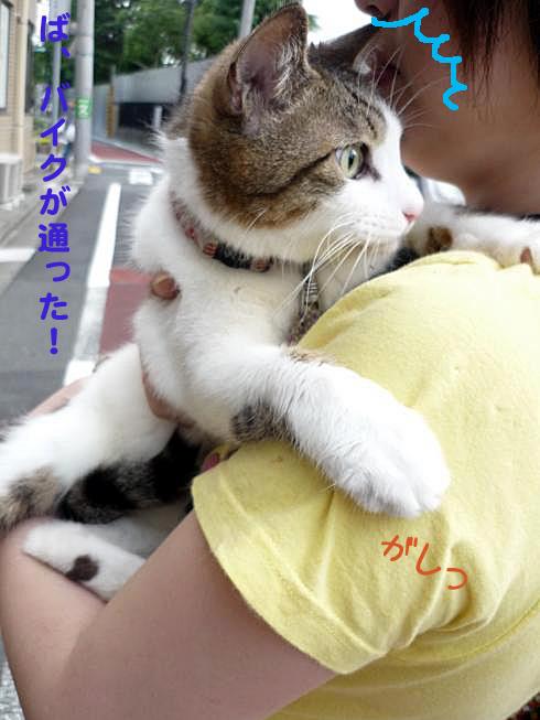 ママに抱っこ2