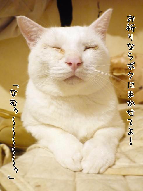 03_ぶーちゃん祈り