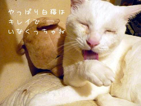 白猫ならば