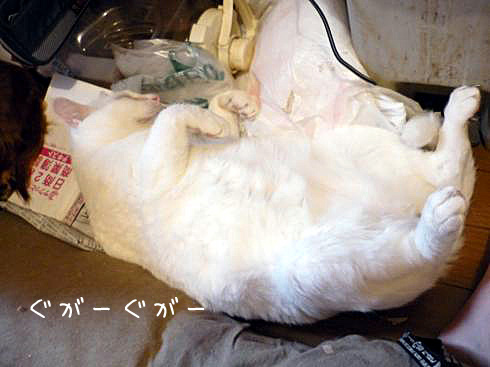 ぶーちゃん寝る1