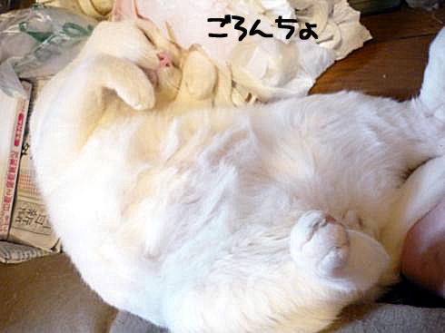ぶーちゃん寝る2
