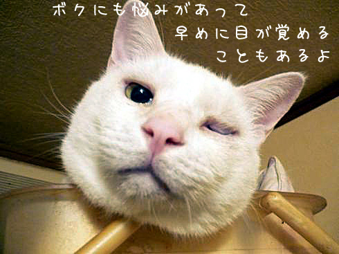 ぶーちゃんお目覚め