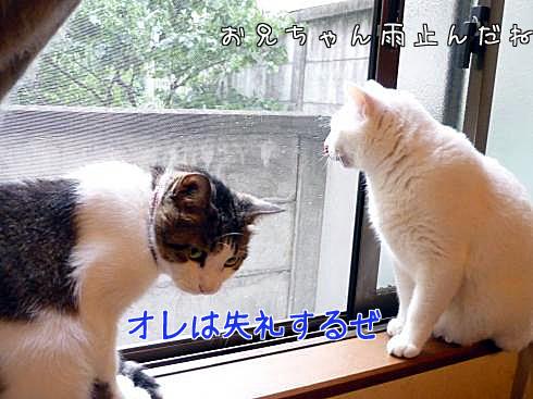 窓際のふたり2