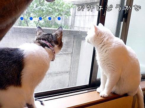 窓際のふたり1