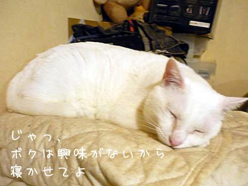 ぶーちゃん寝る