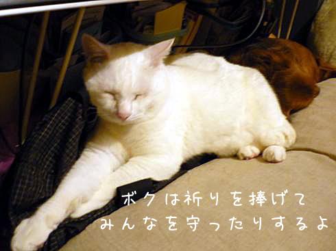ぶーちゃん僧侶1