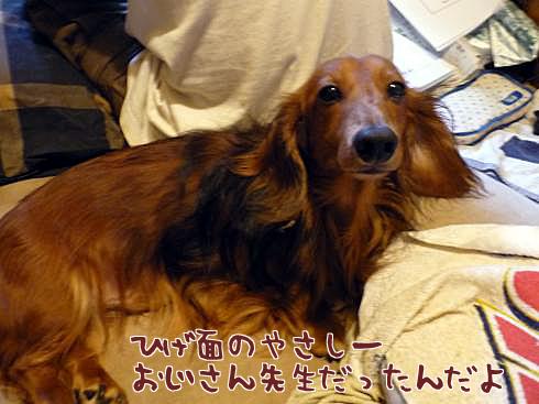 ひげセンセー