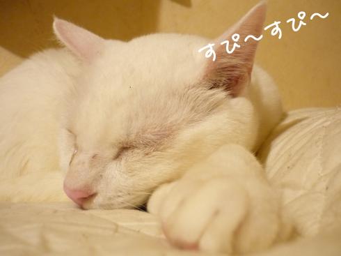 ぶーちゃん爆睡