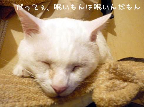 ぶーちゃん眠たい
