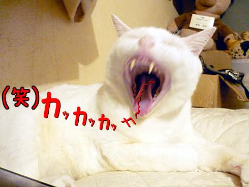 04_ぶーちゃん爆笑