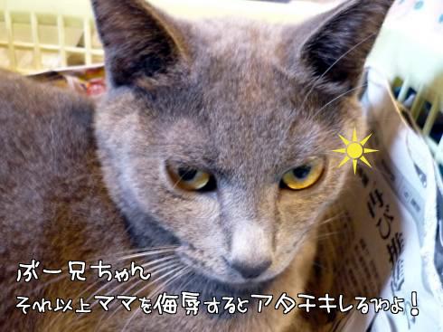 06_ゆきじ怒る