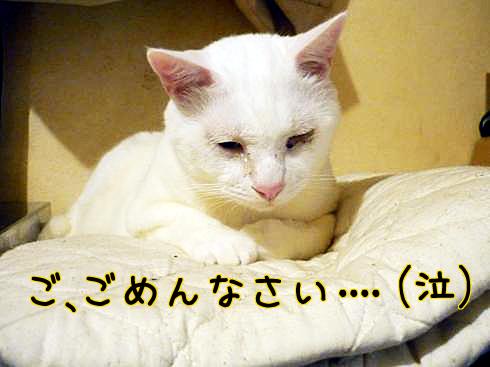 07_ぶーちゃん反省
