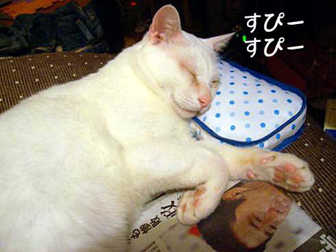 枕とぶーちゃん