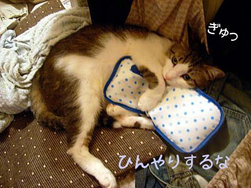 枕とマニー