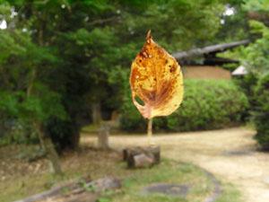 葉っぱ02