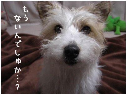 2008_0120画像0088