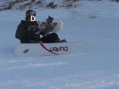 ボード犬2