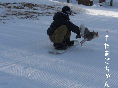 ボード犬6