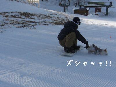 ボード犬7