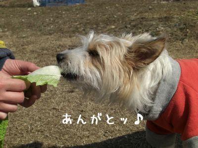 2008_0309画像0064