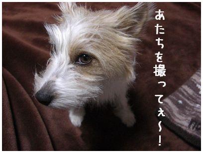 2008_01130080.jpg