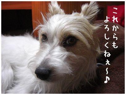 2008_01190009.jpg