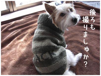 2008_012110088.jpg