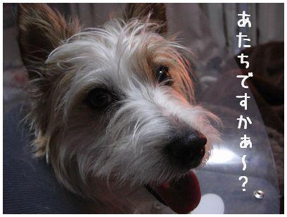2008_01270020.jpg