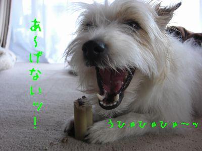 2008_03010085.jpg