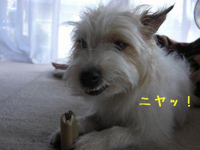 2008_03010087.jpg