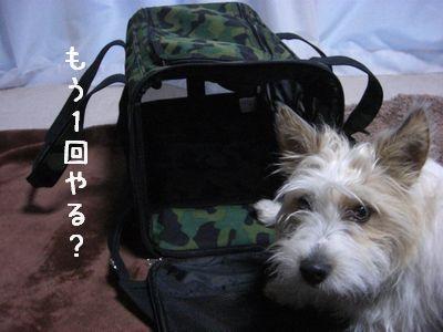 2008_03070183.jpg