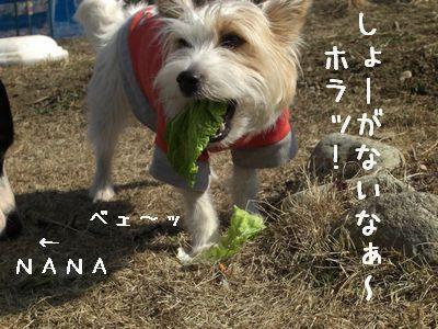 2008_03090060.jpg
