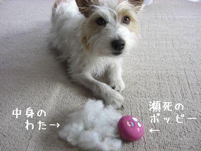 2008_03130171.jpg