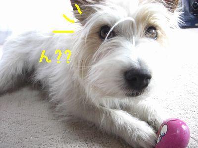 2008_03130187.jpg