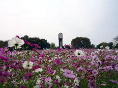 熊本市動植物園を真剣に楽しんでみる。