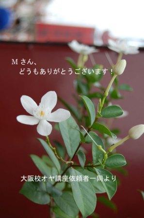 マレーシアの花