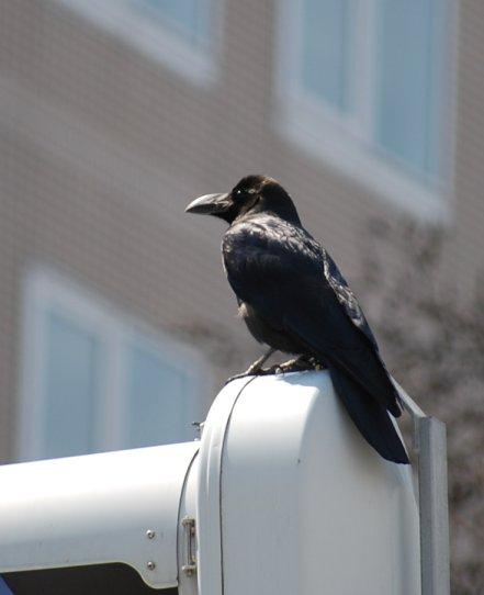 bird4-2.jpg