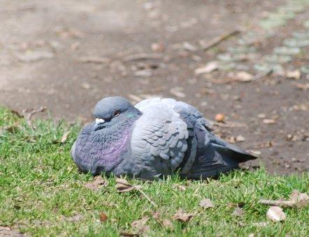 bird4-4.jpg