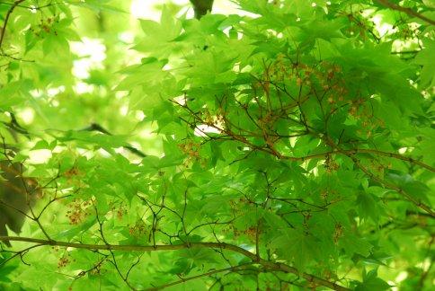 botanic4-4.jpg