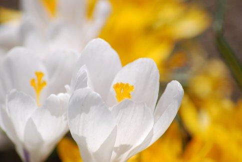 flower4-11.jpg