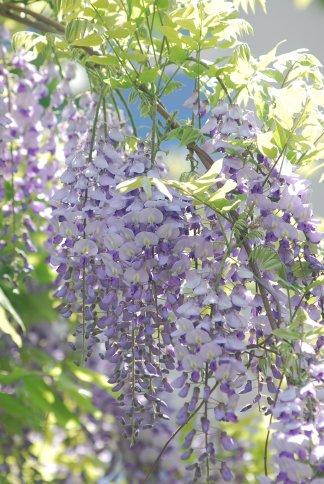 flower4-113.jpg