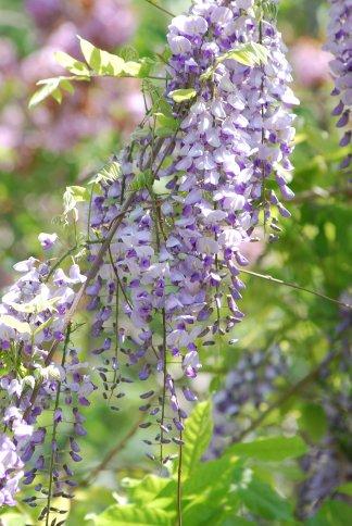 flower4-114.jpg