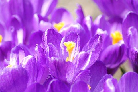 flower4-12.jpg