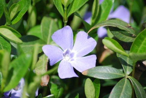 flower4-13.jpg