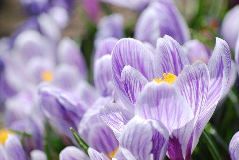 flower4-14.jpg
