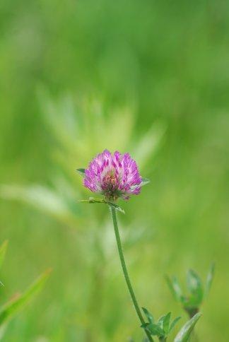 flower4-142.jpg