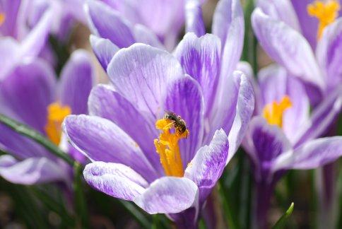 flower4-15.jpg