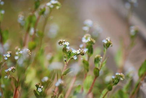 flower4-18.jpg